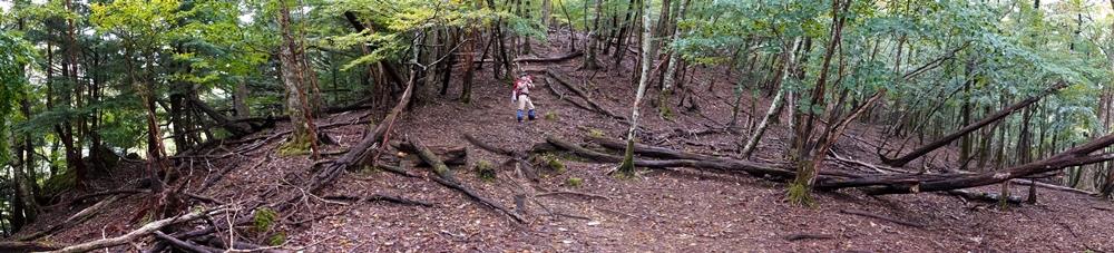 三嶺 ブナの森