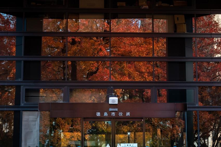 徳島市役所 タイワンフウ