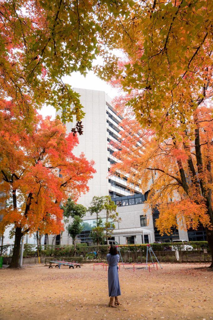 徳島 幸町公園 タイワンフウ