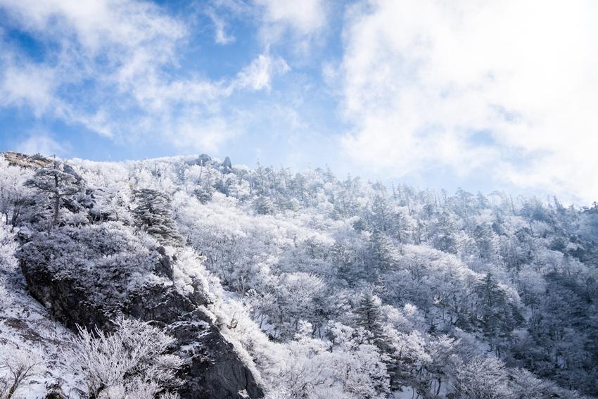 剣山 霧氷